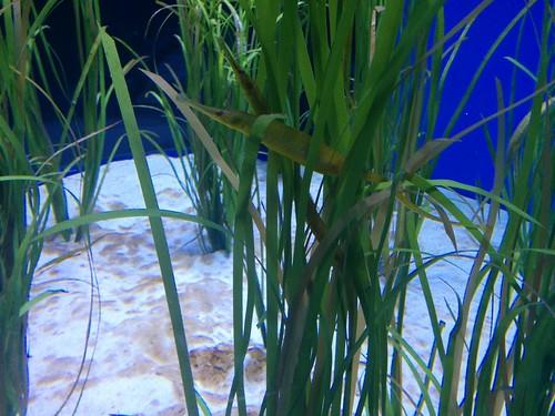 Hiding #toronto #ripleysaquarium #aquarium #fish #green #latergram