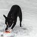 Julie-Schnee 10-12-17-2.jpg