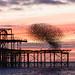 Starlings flocking around Brighton's West Pier
