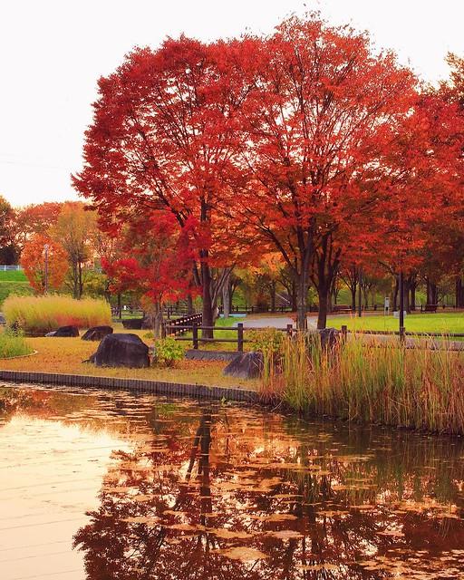 公園の中でもこの辺は紅葉が綺麗でした。 #深北緑地 #深北緑地公園 #公園 #紅葉 #秋 #夕方 #池 #refrection #instagood #instacool #instapic #instadaily #all_shots #photo #tflers #vsco #photooftheday #webstagram #picoftheday #igersjp #igers