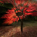Acer Explosion
