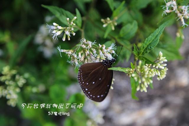 IMG_5388-10