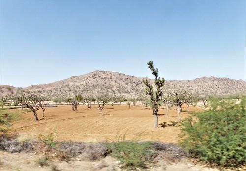 i-Jodhpur-Jaipur-train (26)