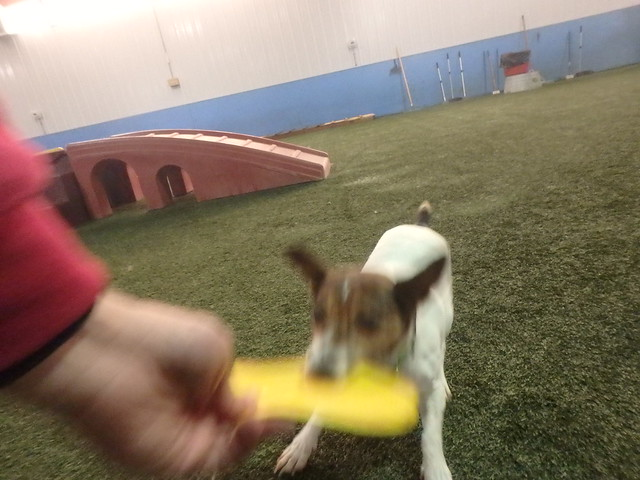 11_27_17 Frisbee Play :)-