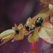 Black Berries by marinela 2008