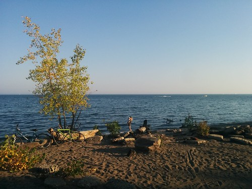 On the beach #toronto #humberbayparkeast #humberbay #lakeontario #beaches #trees  #latergram