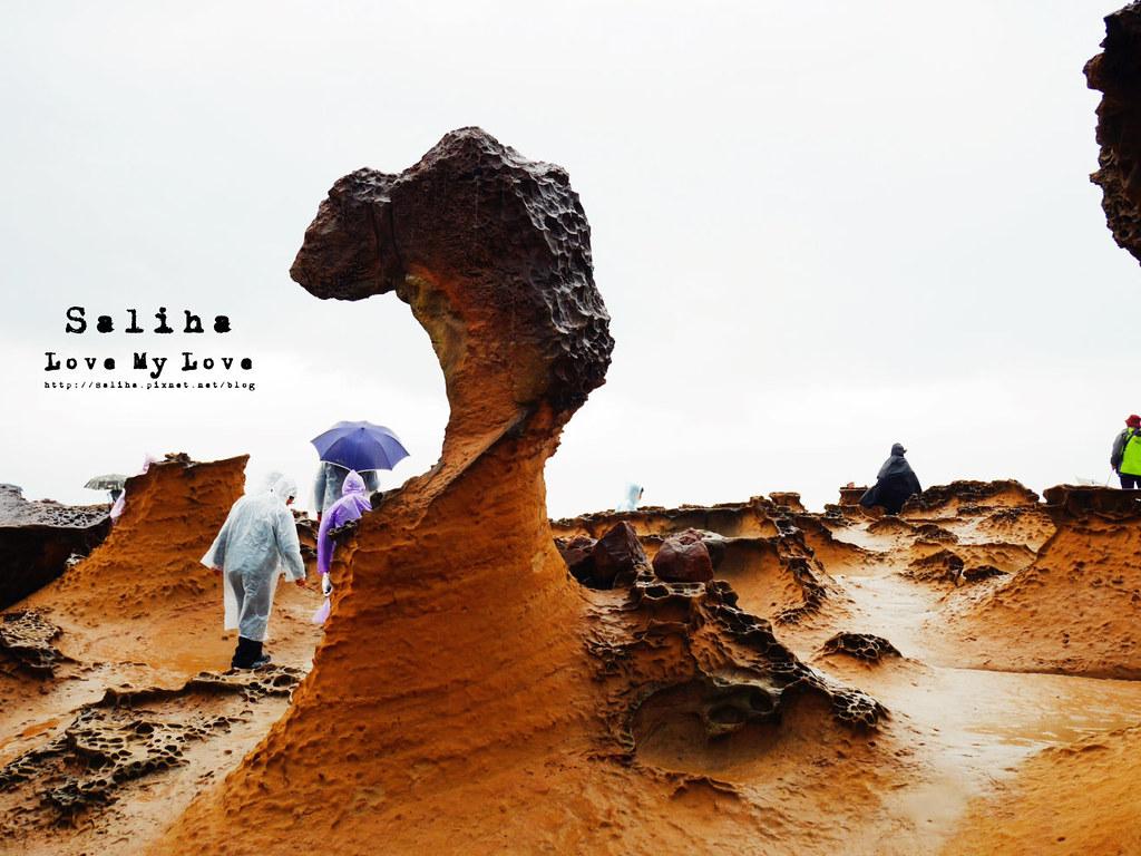 新北金山萬里一日遊景點推薦野柳地質公園 (14)