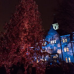 24028624987 2017 Christmas Tree Lighting Ceremony