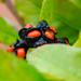 Orange, black: magnolia berries