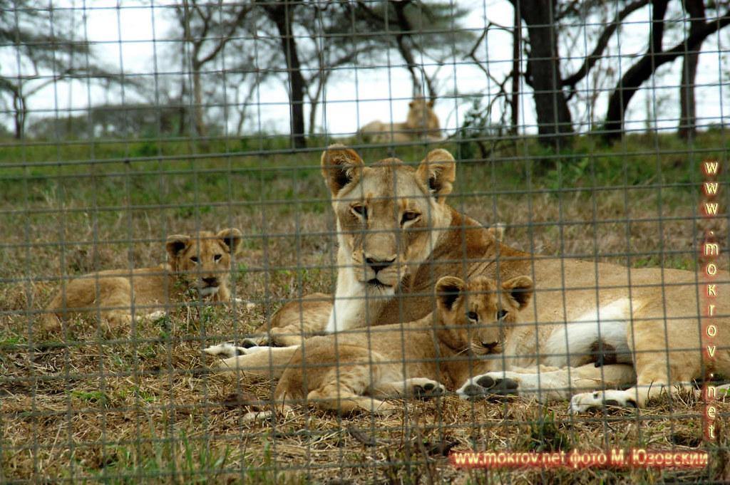 Национальный парк Зулу Ньяла, Львиная ферма (2)