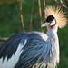Spikey haired bird
