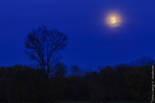 eaglepark minnesota astrophotography autumn bluehour civiltwilight fall forest fullmoon landscape moon seasons trees twilight longexposer
