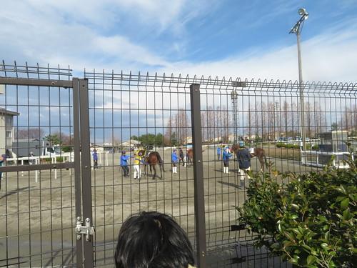 金沢競馬場で金網越しに枠場を見る