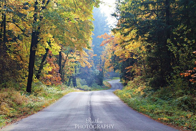 Curvy country road on a gorgeous fall day