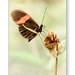 Butterfly on single flower