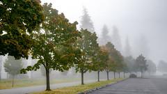 Everett Fog