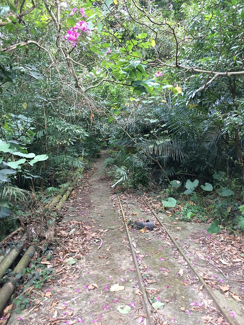 出磺坑-纜車道
