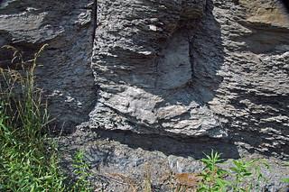 Fossil tree trunk (Kanawha Formation, Middle Pennsylvanian; Interstate 64 roadcut, Kanawha County, West Virginia, USA) 6