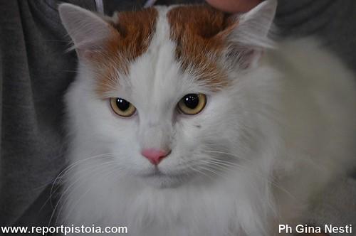 Mostra internazionale felina