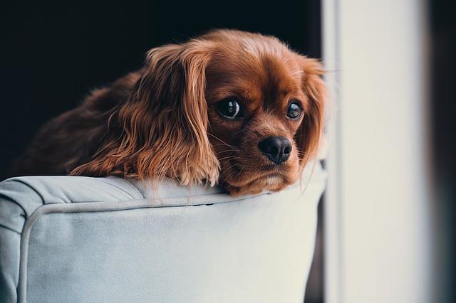 誤飲させないためにきれいな家で暮らす犬