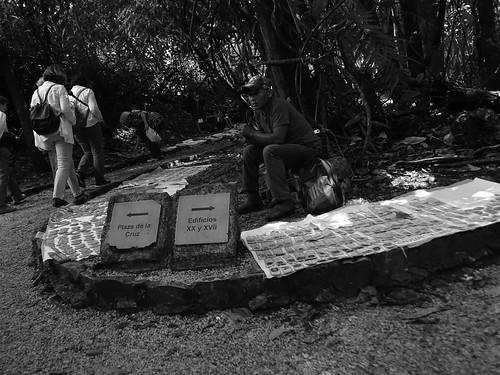 Palenque No.10 OP 77