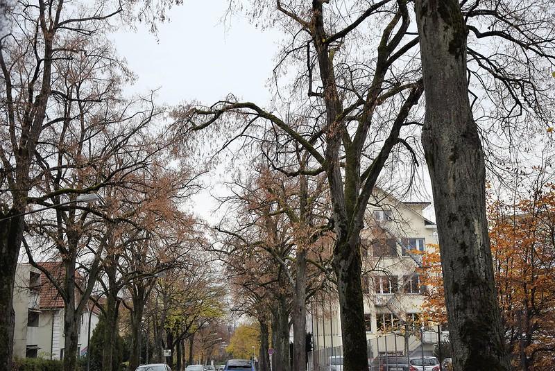 Autumn Trees 10.11 (3)
