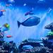 Harmony under The Deep Blue Sea