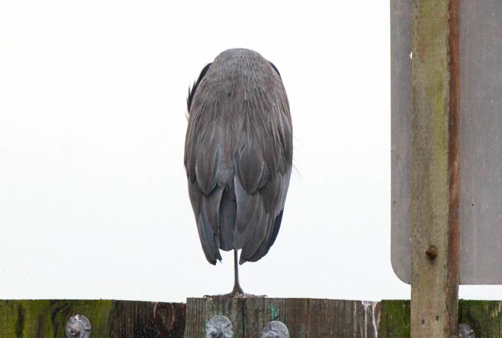 Heron 1 (1 of 1)