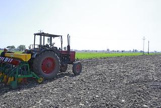 Sat, 10/28/2017 - 12:31 - Raised-bed planting