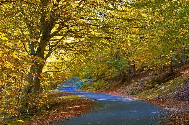 Route d'automne. Explore.