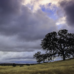 9. November 2017 - 8:12 - The solitary Oak