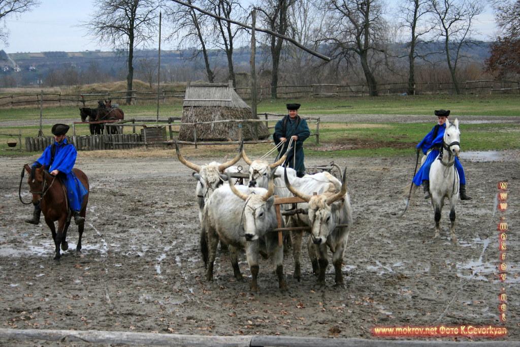 Конная Ферма Пуста  — Венгрия фото