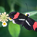 Butterfly #56.