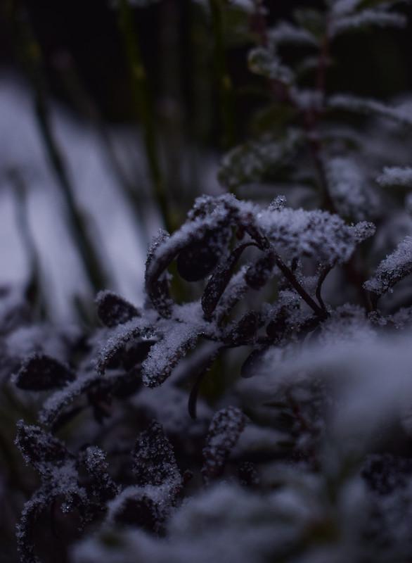 talvi15_edited