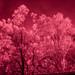 Infrared Festival