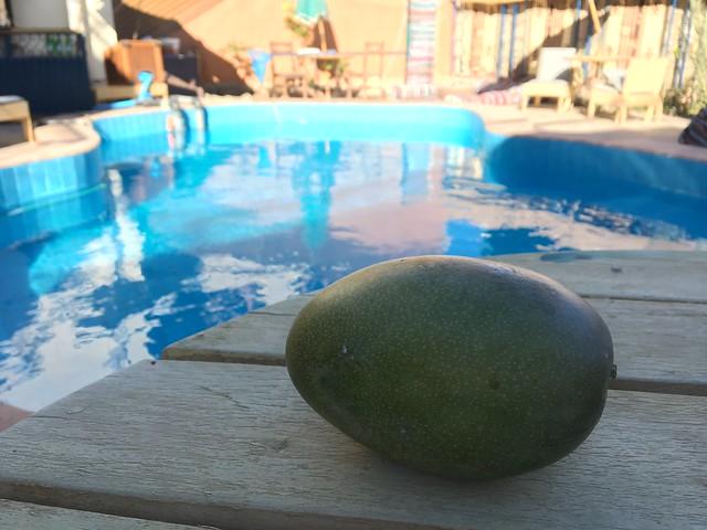 700gのマンゴーが約160円