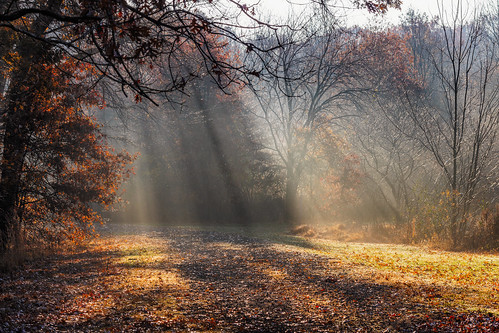 woodland autumn sunrays landscape woods mist fog fall forest davidsonsmillpondpark northbrunswicktownship newjersey unitedstates us