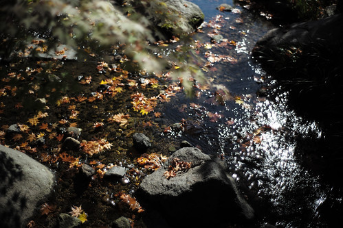 River and fallen leaves