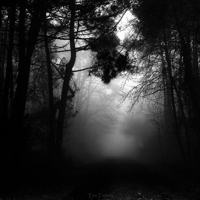 Walkin in the mist