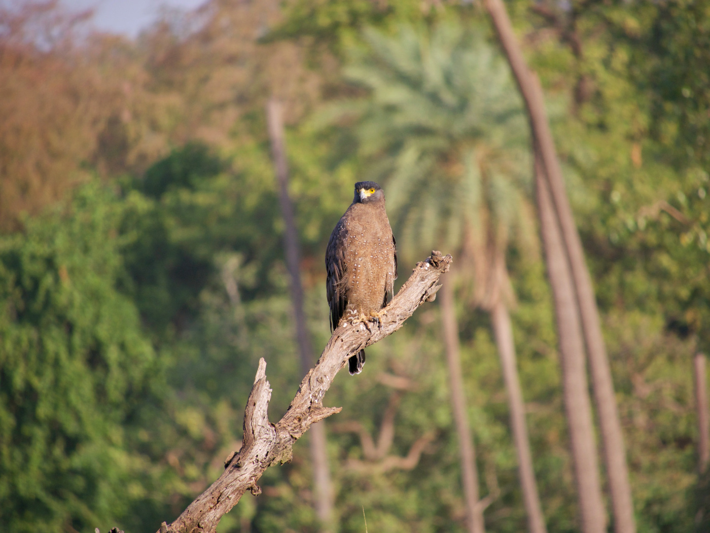 108-India-Ranthambore