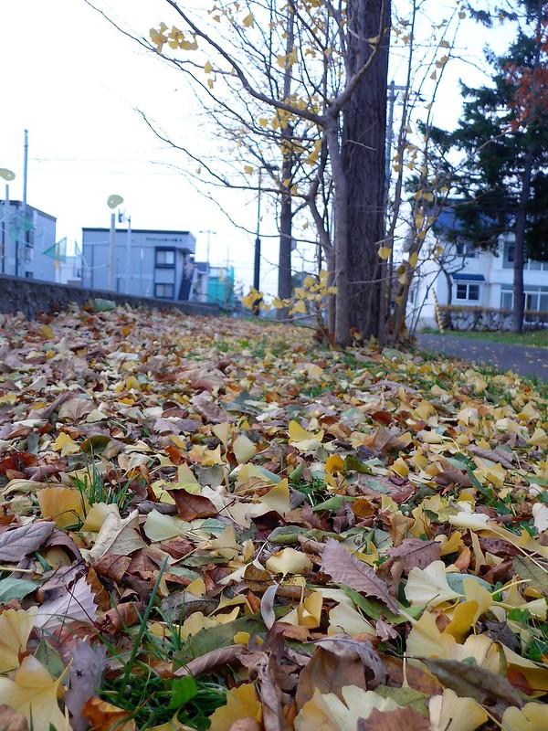 西公園 落ち葉