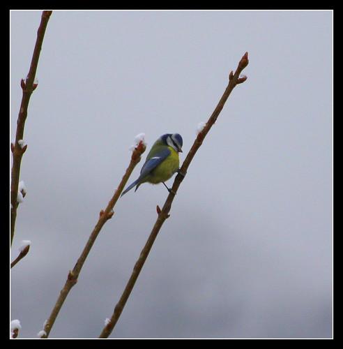 les visiteurs à plumes sauvages  2 - Page 12 37593487404_0b6263019f