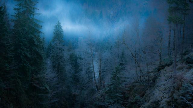 Allgäu Schrecksee mystischer Wald