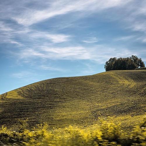 at Tuscany