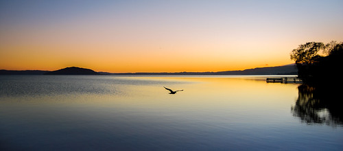 dawn golden tide sunrise tree ankh rotorua water newzealand sky lakerotorua seagull caldwell clouds light