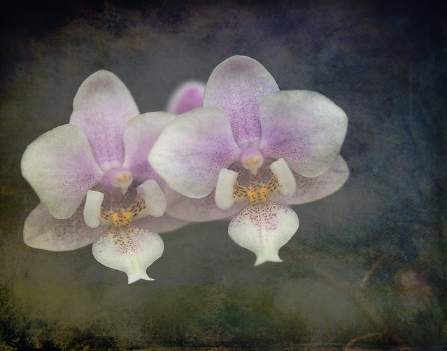 ~Orchid~
