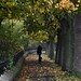Walk in the Park D210bob DSC_0913