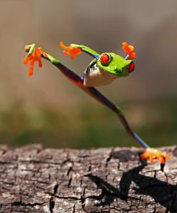 Fun Photos Of Frogs With Personality