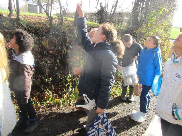 24 november - Bomen planten op de Kesterheide (in de Keltische eikencirkel)