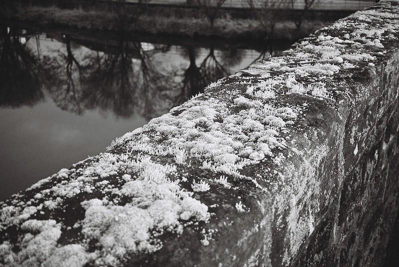 Frost Lichen